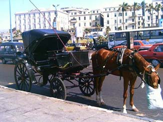 Traditional Carriage in Alexandria